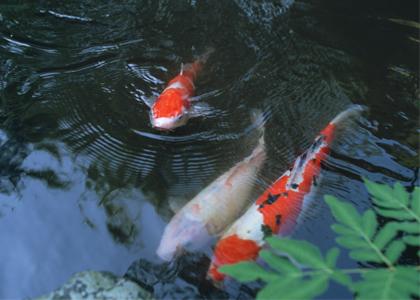 freshhome-fish-012