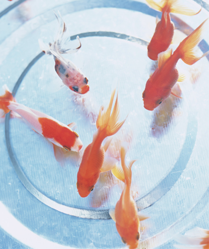 freshhome-fish-03