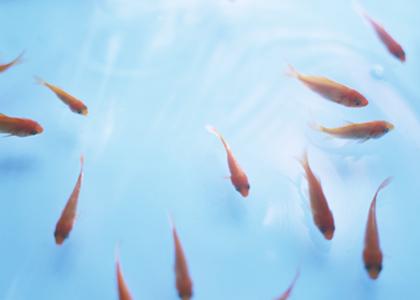 freshhome-fish-05